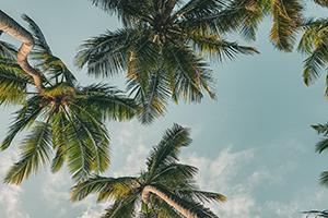 Coconuts-vegan-friendly
